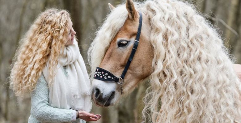 All you need to know about the Haflinger, aka,the Avelignese horse