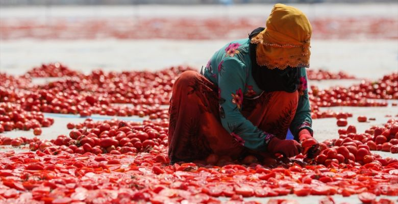 Sun-dried tomatoes blanket Turkish farm